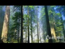 Carbon Based Lifeforms - Photosynthesis