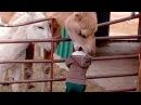 ЖИВОТНЫЕ и ЛЮДИ которые заставят Вас СМЕЯТЬСЯ - Приколы - Смешная подборка про животных и людей