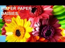 Make a Wafer Paper Daisy Cake Decorating Tutorial with Kara Andretta