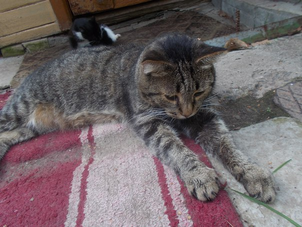 Этот котик упрямо лежит на кусочке дорожки, постеленной около двери до