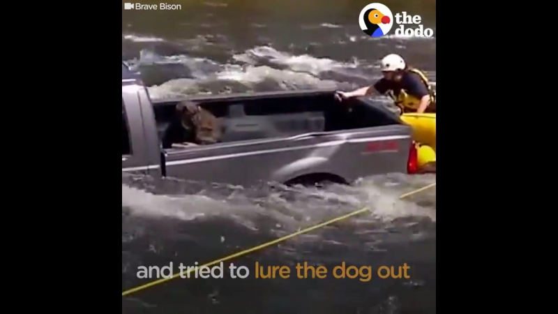 Спасение собаки, оказавшейся в грузовике в посреди бурлящей реки.