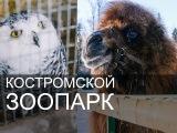 Костромской зоопарк. Зима