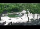 Слоненок упал в бассейн