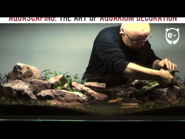 Aquascape Timelapse The Green Machine Tank Selection
