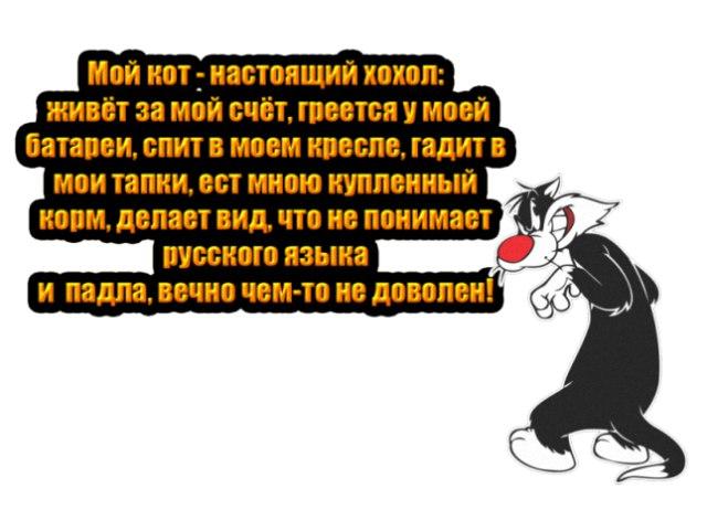 https://pp.userapi.com/c837630/v837630107/5dfdf/u-HMySogaYQ.jpg
