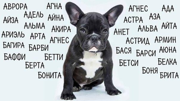Имена собаки на букву в