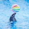 Дельфинарий «Ривьера» Сочи