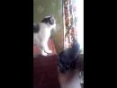 Просто мои любимые коты Яша и Бося