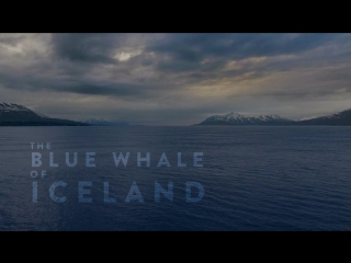 The blue whale of iceland