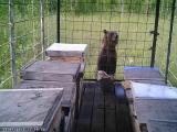 Медведи напали на пасеку в Кыштовском районе Новосибирской области