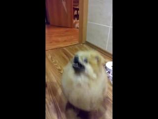Красоточка Люси,танцует)Лапушка,любимка.