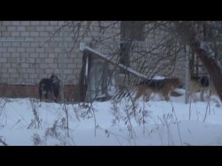 ВКонтакте видеозапись № 1262. M2U03330 - Собаки в городе
