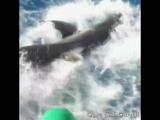 Огромная акула вплыла в клетку к дайверу