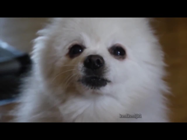GABE THE DOG - popcorn