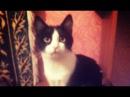 Смешные Кошки И Котики От Семена Алисы 198