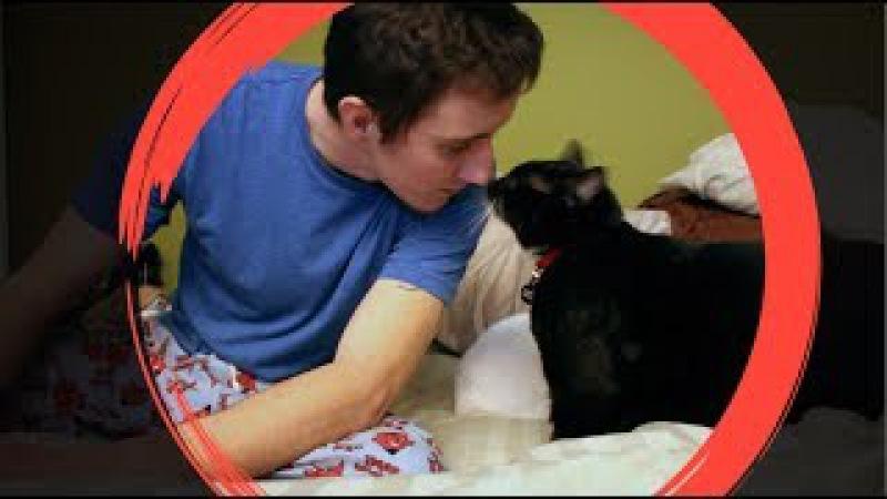 Кот, который вернул меня с того света... Невероятная история спасения. Русская о...