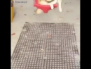 Собака-улыбака на качелях