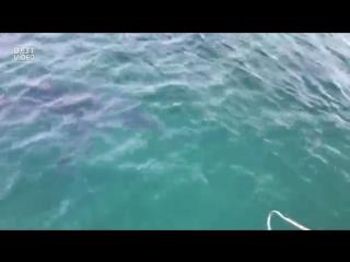 Рыбаки_сняли_и_наткнулись_акулу,_выпрыгивающую_из_водыBest_Video92