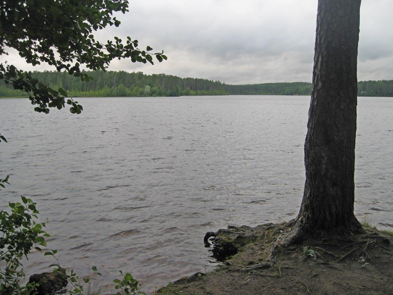 щучье озеро комарово рыбалка может быть первое
