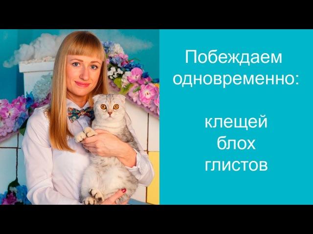 ИН-АП комплекс для кошек. Инструкция по применению » Freewka.com - Смотреть онлайн в хорощем качестве