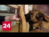 Собачья работа. Специальный репортаж Ирины Куксенковой