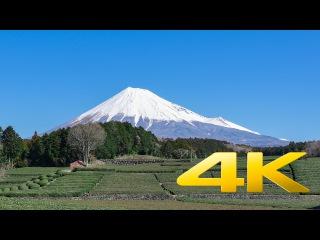 Obuchi Sasaba : Mt. Fuji and Green Tea fields - Shizuoka - 大淵笹場 : 茶畑と富士山 - 4K Ultra HD 🗻 🇯🇵 🍵