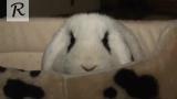 УДИВИТЕЛЬНЫЕ факты о кроликах