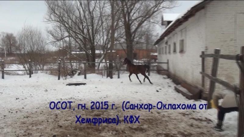 Осот-2015 от Санхора и Оклахомы от Хемфриса, КФХ