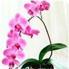 Все об орхидеях и других цветах