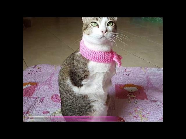 Кошка по кличке Эйбл..Чудеса случаются