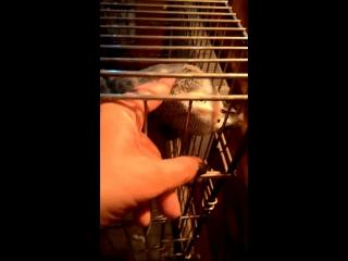Птичка летим со мной где много вкусненького