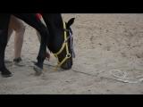 Когда твоя лошадь знает толк в учении детей:D
