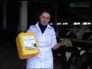 Опыт применения кормовых добавок и биопрепаратов для животных производства НВП БашИнком │БашИнком