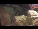 22.09.2014 наши аквариумы (1)