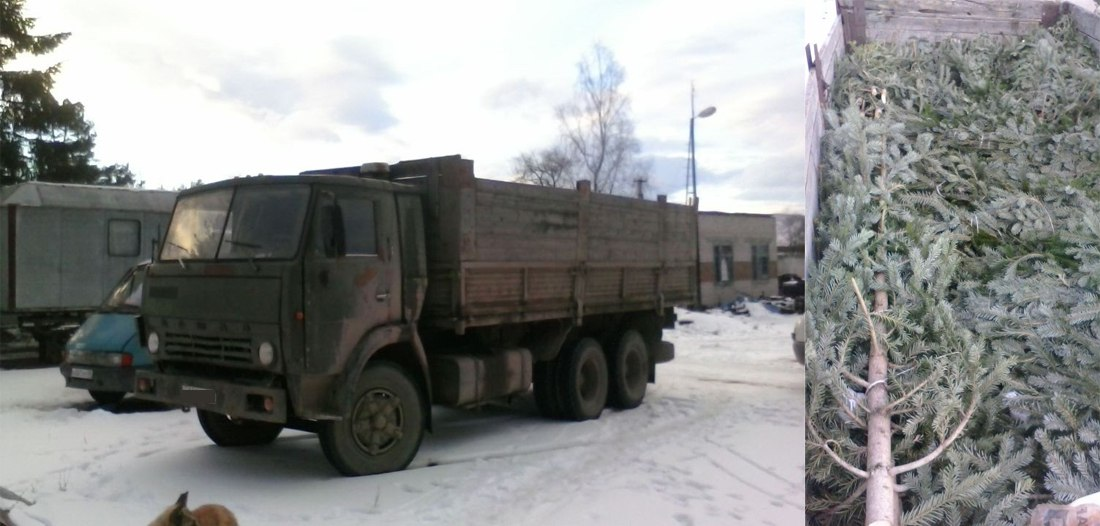 В Зеленчукском районе задержан КАМАЗ с новогодними елями