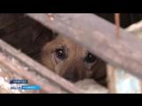 В Кемерове собаку по кличке Шарик замуровали в будке