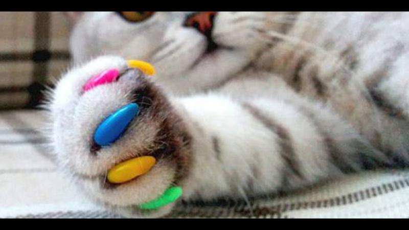 Как правильно приклеить антицарапки коту