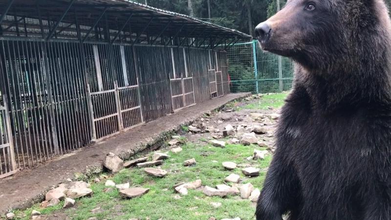 Trip to Sinevir. Part 5 Центр реабилитации бурых медведей