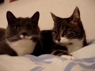 Милая беседа двух котиков