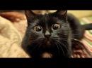 Классные приколы про животных. Смешная подборка с котами и кошками. Самые смешны...