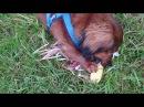 🌽 🐕 Corn dog ¿? Mailo mag Mais zum Frühstück.