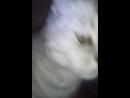 Моя котэ :3