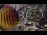 ДИСКУС . Дискусы украшение аквариума