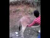 турбо ишак