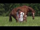 Конь породы дончак, живой вес...да кто его знает сколько кг?!))