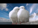 Когда любовь приходит с неба - Darina Kochanzhi