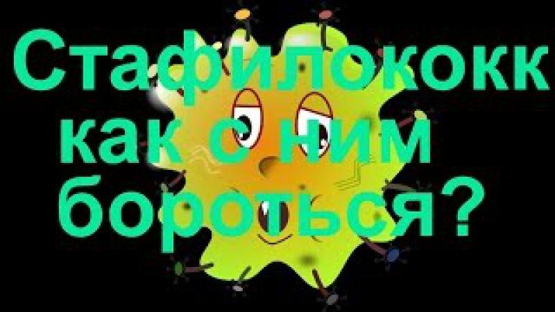 Стафилококковая инфекция как с ней бороться