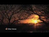 Silent Night - Richard Hawley, Jarvis Cocker and Lisa Hannigan