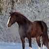 √Фото подборки - лошади!√