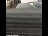Лучшее видео с животными за неделю
